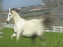 Royalty Free Video of Horses