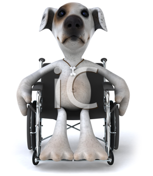 Royalty Free Clipart Image of a Jack Russell in a Wheelchair