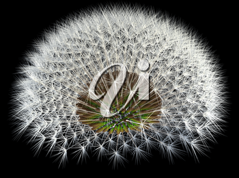 Dandelion seeds, 3d generated, black background. Fibonacci sequence and golden ratio experiments.