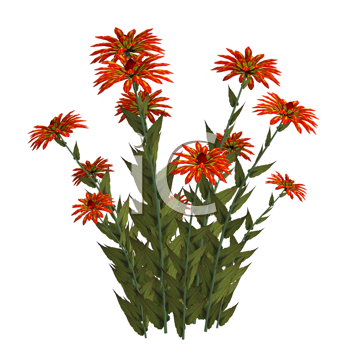 Royalty Free Clipart Image of a Group of Flowers