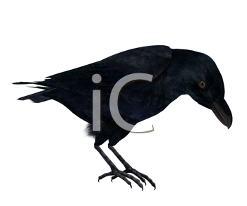 Royalty Free Clipart Image of a Crow
