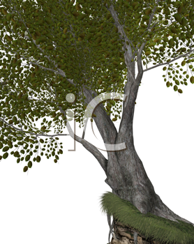 Royalty Free Clipart Image of a Big Tree