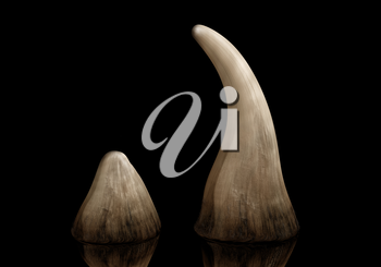 Rhinoceros horn sold on the black market for use in traditional Chinese medicine