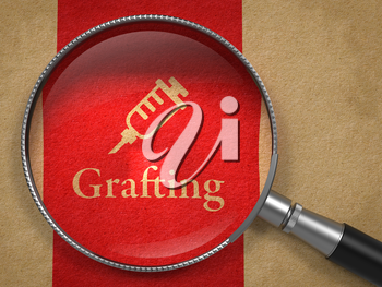 Grafting Concept. Magnifying Glass with Syringe Icon on Old Paper with Red Vertical Line Background.