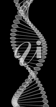 DNA structure model