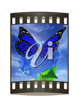 Beautiful Ajisai Flower and butterfly against the sky. The film strip