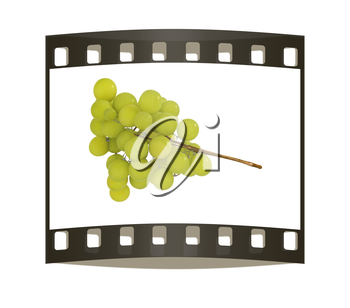 Grapes isolated on white background. The film strip