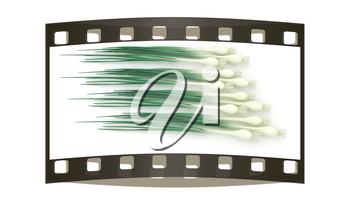 Green onion on a white background. The film strip