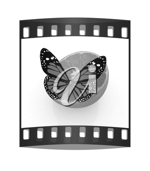 Red butterflys on a half oranges on a white background. The film strip
