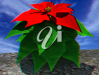 Beautiful poinsettia Flower against the sky. Anaglyph. View with red/cyan glasses to see in 3D. 3D illustration
