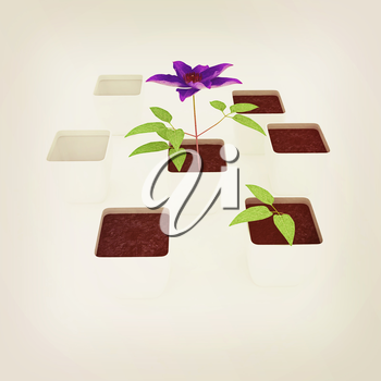 Clematis a beautiful flower in the white pot. 3D illustration. Vintage style.