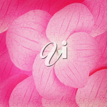 Flowers beautiful petals pink background. 3D illustration. Vintage style.