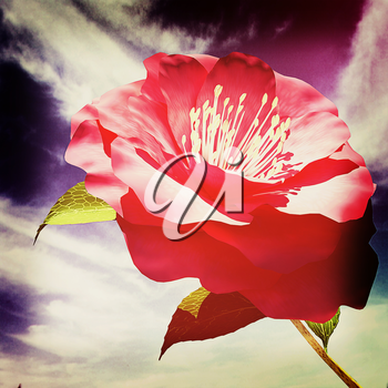 Beautiful Flower against the sky . 3D illustration. Vintage style.