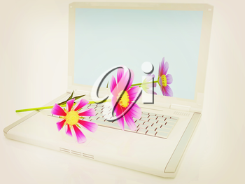cosmos flower on laptop on a white background. 3D illustration. Vintage style.