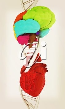 DNA, brain and heart. 3d illustration