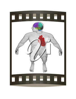 Wire human body model with heart and brain in x-ray. 3d render. Film strip.
