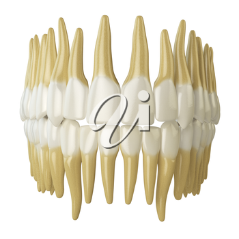 Human teeth  isolated on white. 3d illustration