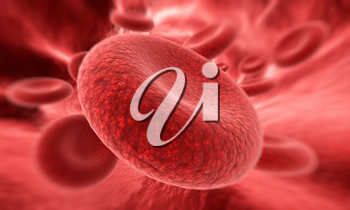 Blood cell  in focus