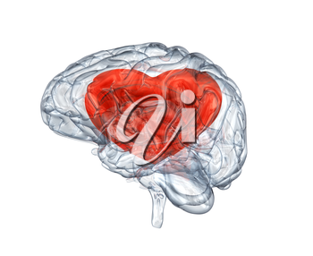 Glass human brain with heart within. Clipping path included