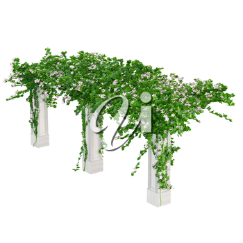 Angled gardening constructions with ivy and roses pergola