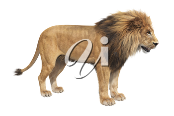 Lion animal big majestic hunter. 3D rendering