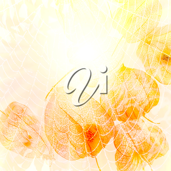 Abstract image of the sun. Sun, web, cape gooseberry, yellow abstract background.