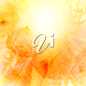 Abstract image of the sun. Autumn background.