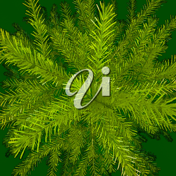 Green background. Green branches. Christmas tree.